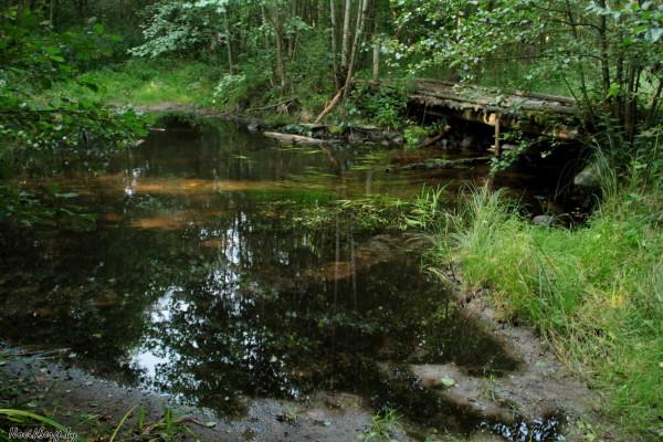 лесной брод, старый деревянный мост, лес, ручей