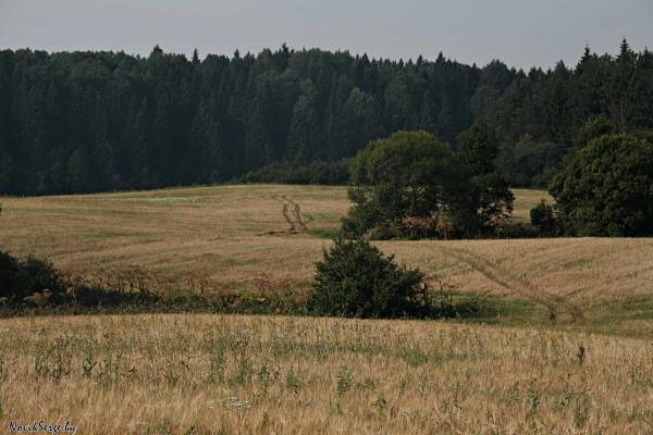 высохшее пастбище, полевая дорога