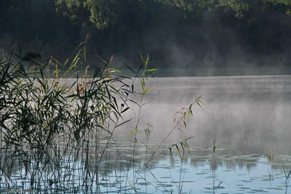 туман, утро, озеро Неклея