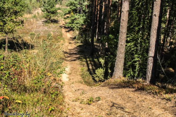 противопожарный ров, сосновый лес