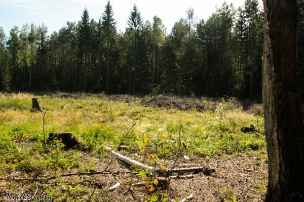 вырубка, лес, полигон