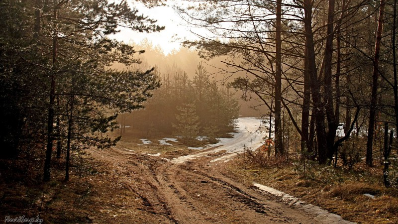 лес, весна, сосны, дорога
