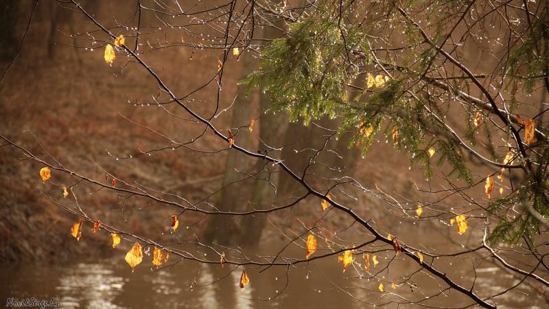 жёлтые листья над водой