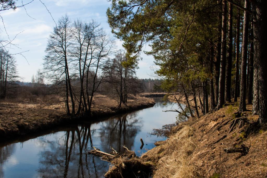 Берег реки Бобр весной
