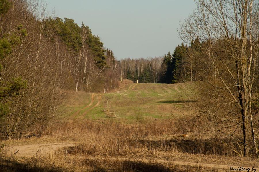 холмистый пейзаж, лес, поле