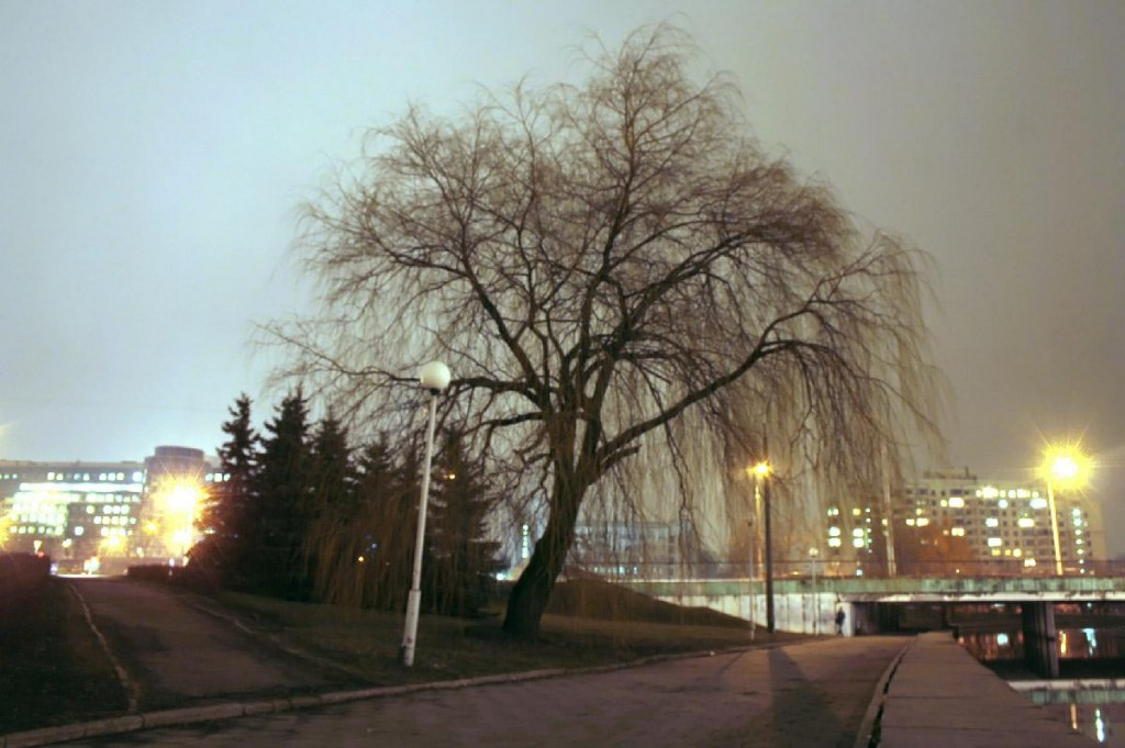 Зима, ива, улица Ульяновская 2014